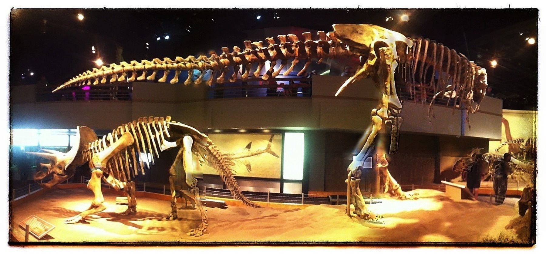 Panoramic of T-Rex and Triceratops. IPhoneography Photography Dinosaurs Alberta