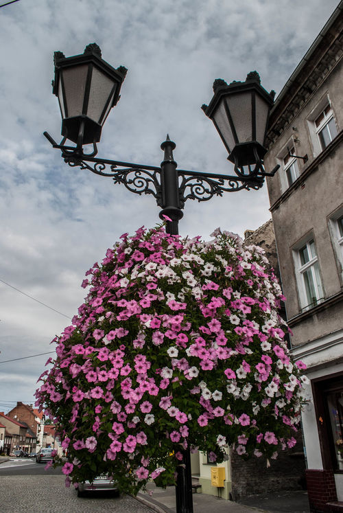 Architecture Blossom Botany Building Exterior Built Structure Cloud Cloud - Sky Cloudy Day Electric Light Flower Fragility Freshness Growth In Front Of Lamp Lantern Lighting Equipment Low Angle View No People Outdoors Pink Color Sky Street Light