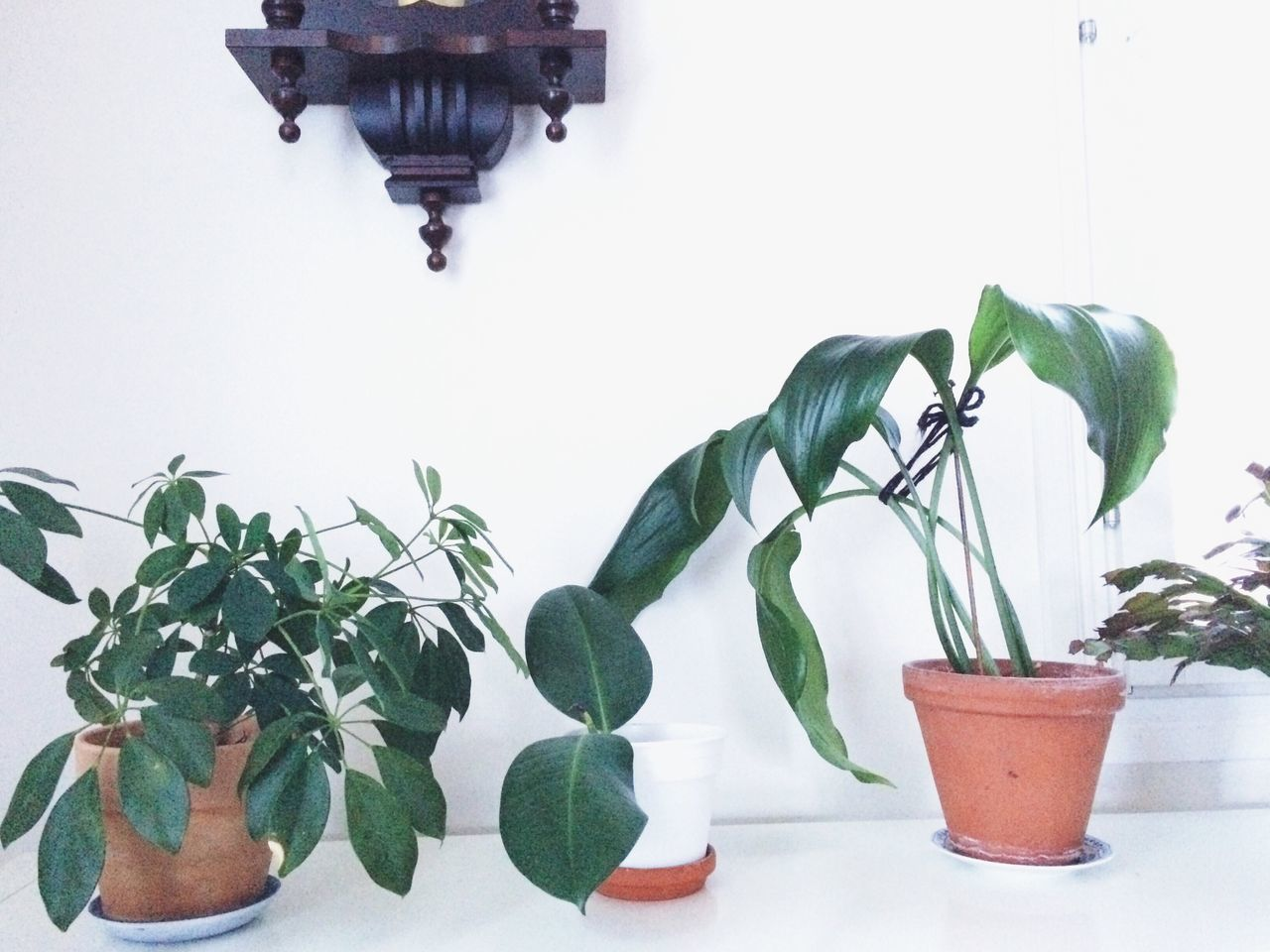 POTTED PLANTS ON THE WALL