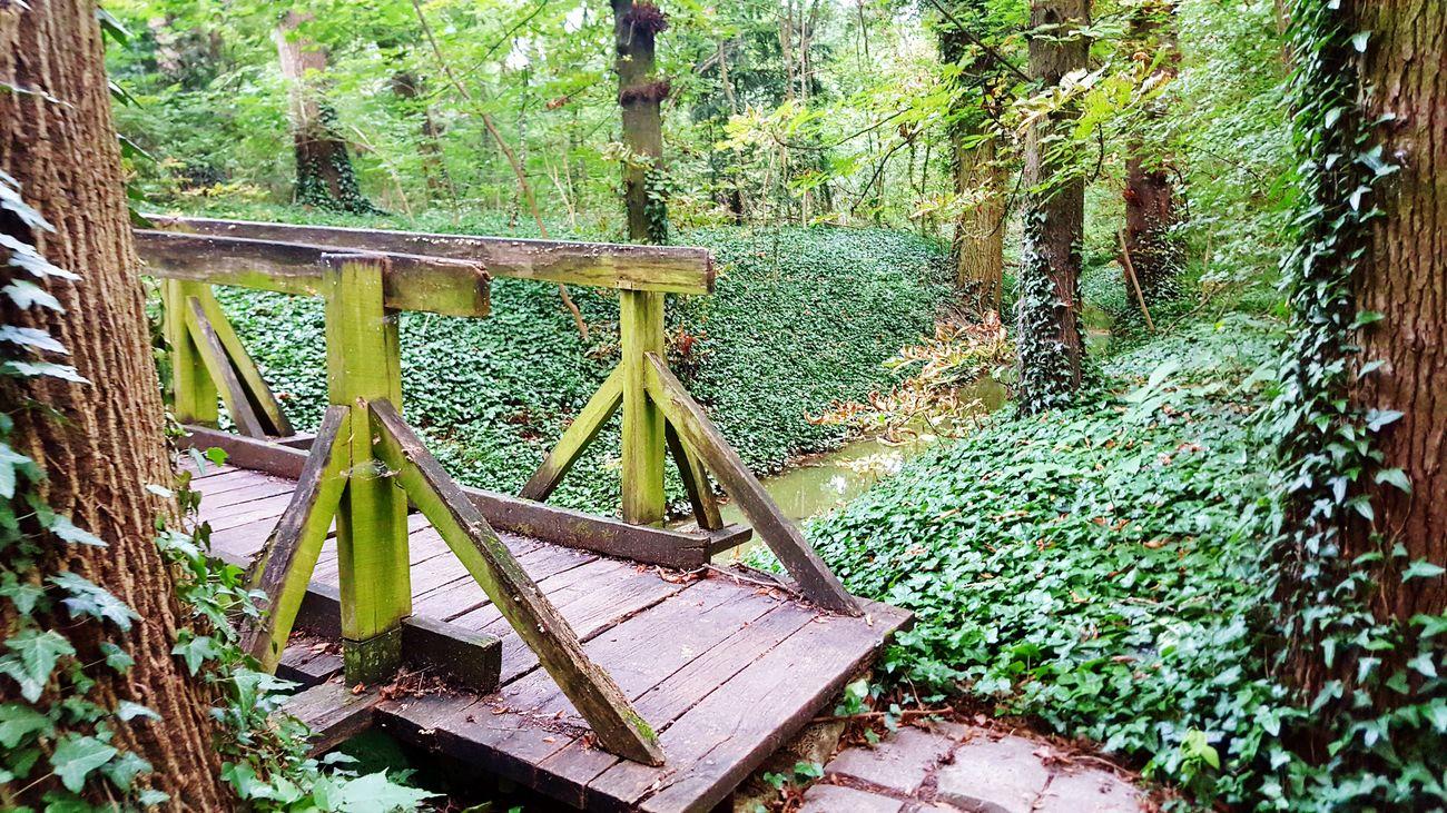 Brunszvik Caste Park, Hungary Forest Forestwalk Forest Photography Bridge Nature_collection Nature Photography