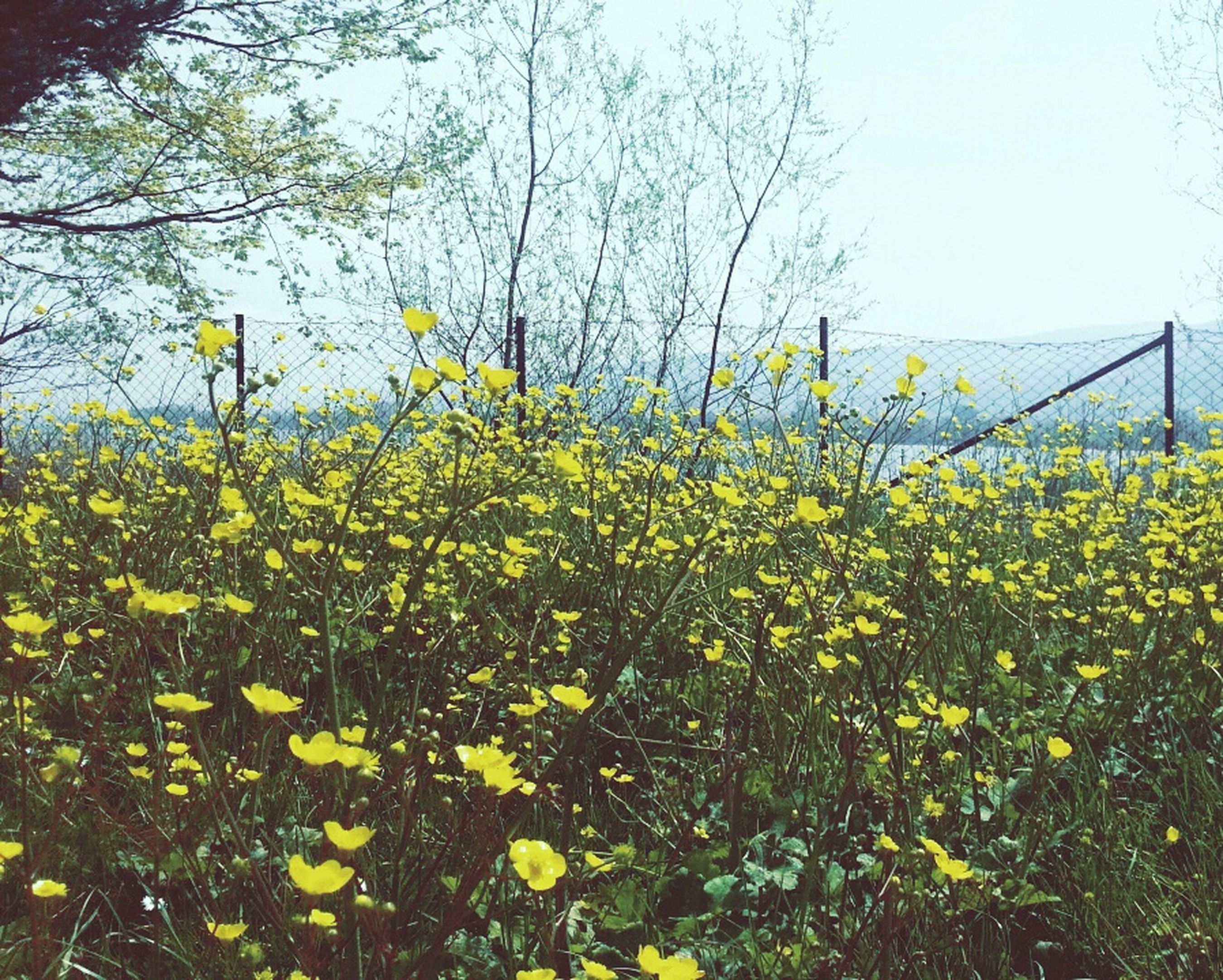 Sekakampı Spring! Fresh Happyday Flowers Goodtime