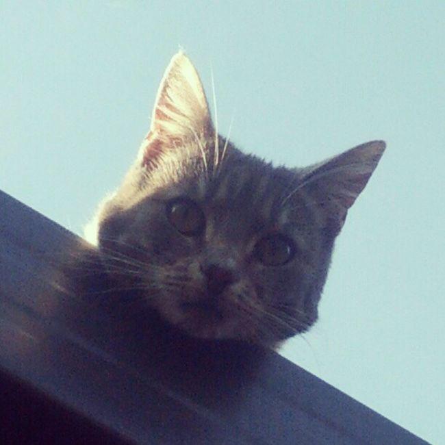Herro you rang?! Mittens Cat Funny Houseroof @chloemichelle88
