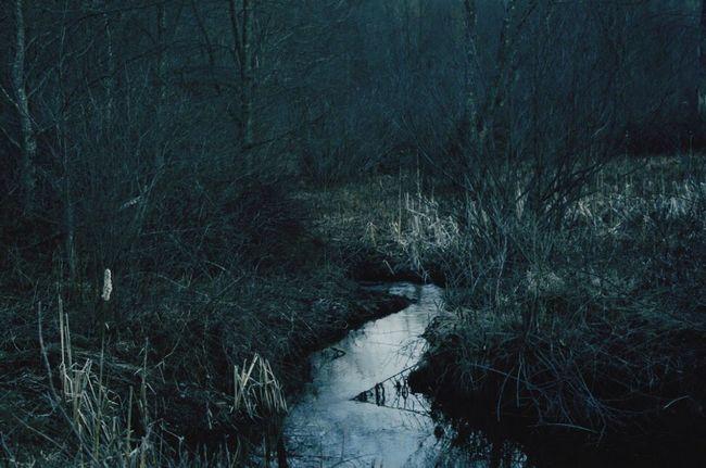 Freeze. Creek Winter