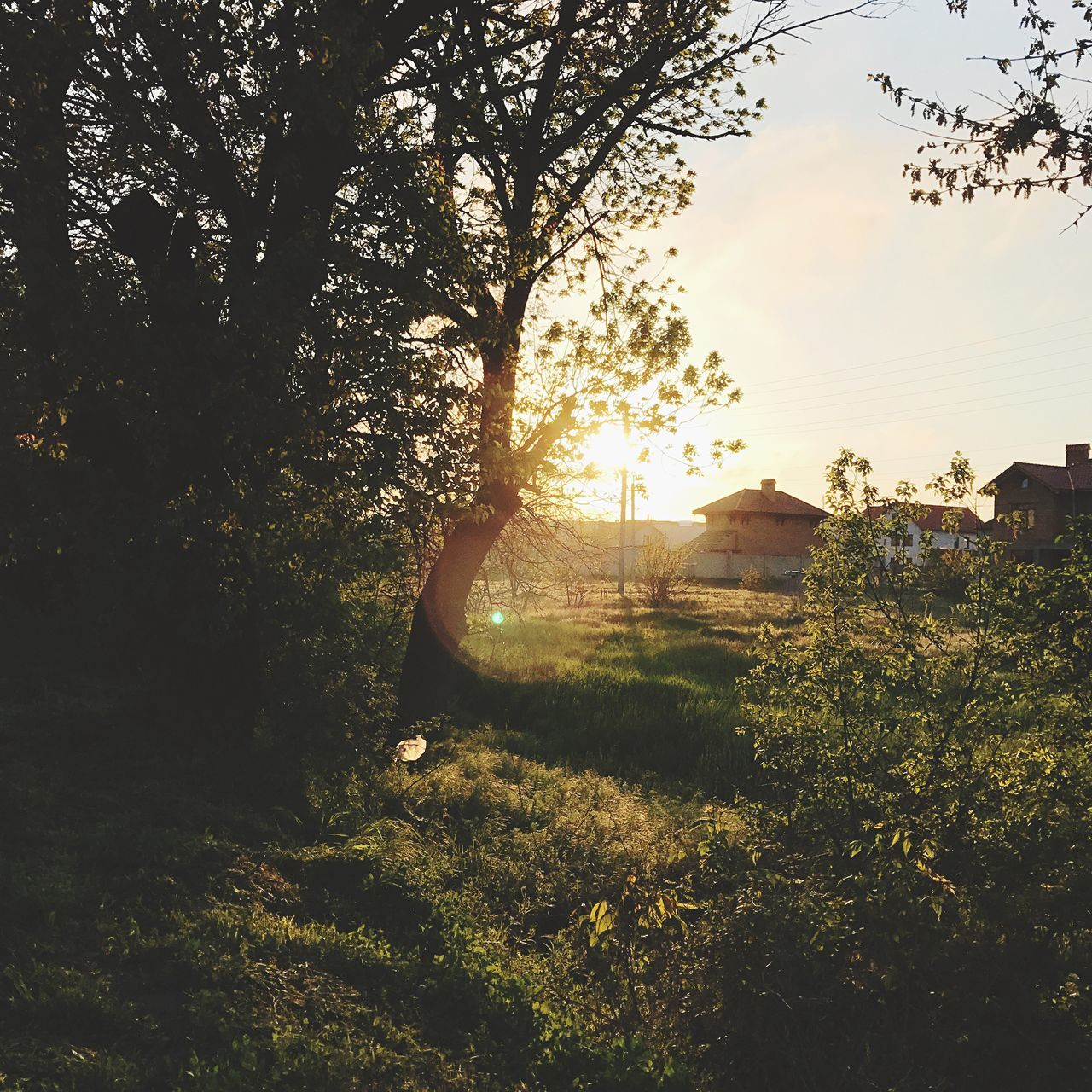 tree, nature, sunlight, built structure, outdoors, no people, tranquil scene, growth, sunset, beauty in nature, tranquility, architecture, building exterior, plant, grass, sky, scenics, day