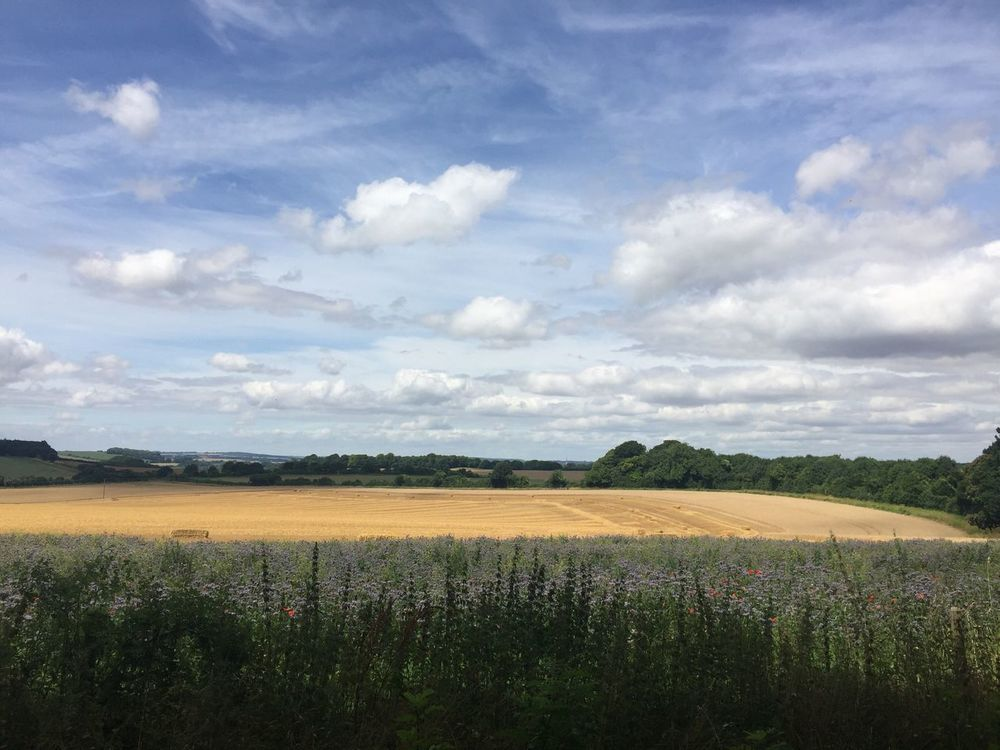 Week On Eyeem Dog Walking Fields Of Gold Horizon Over Land Agriculture Agricultural Land Agriculture Photography Clouds Rural Scene Clouds And Sky Landscape_Collection Landscape Grass Field Fields Of Flowers Blue Red Purple Hay Bales Hay Field