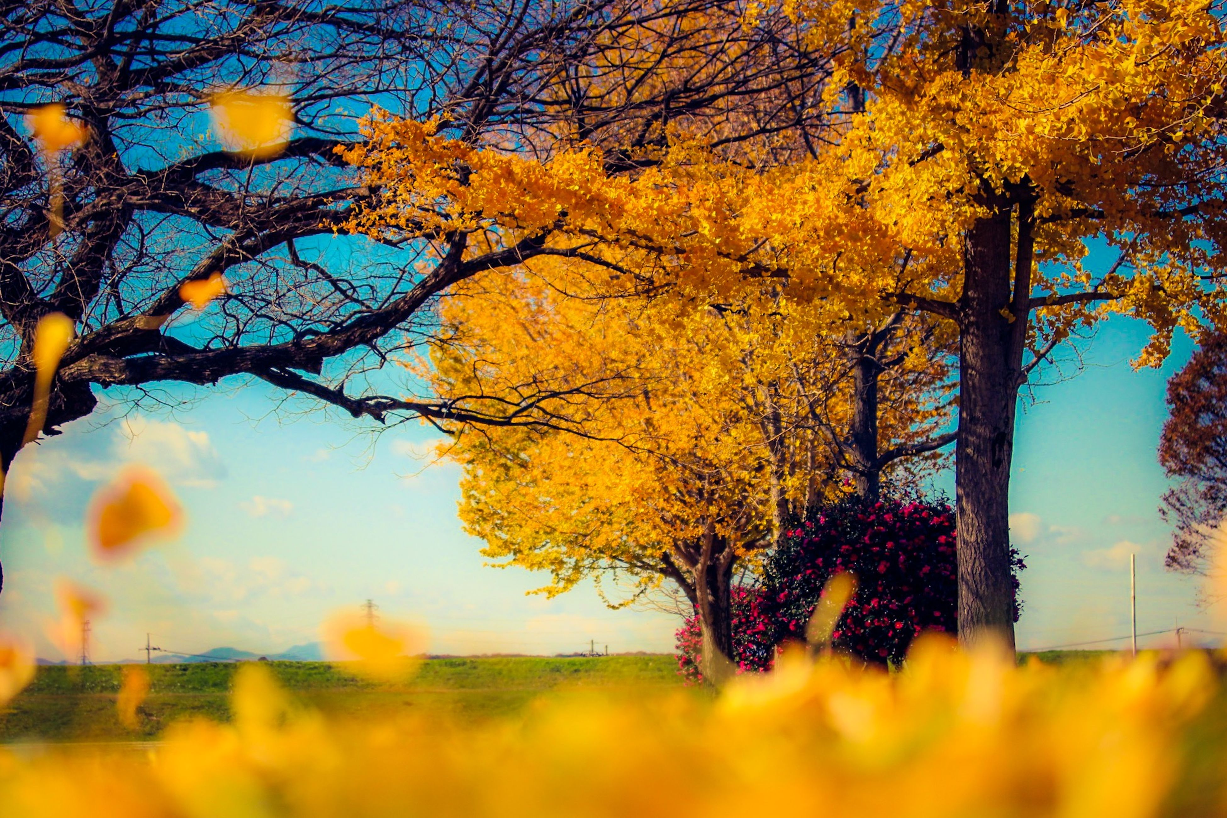 Scenic View Of Yellow Autumn Tree On Field Against Sky