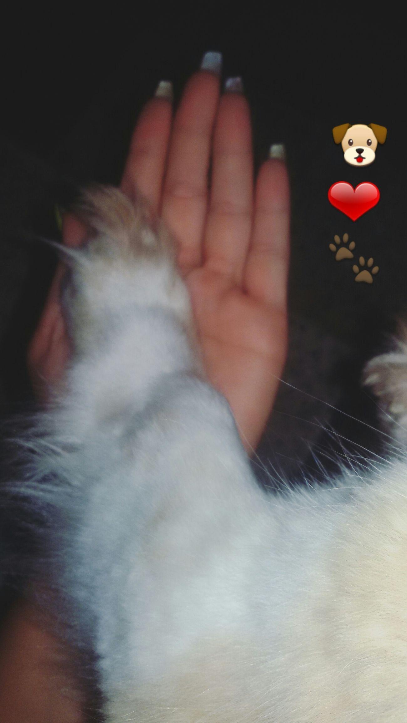 Mybabylove Puppy Babydog Love Lovely Loveit Lovedogs Lovelovelove Mylife ❤❤❤❤❤❤❤❤❤