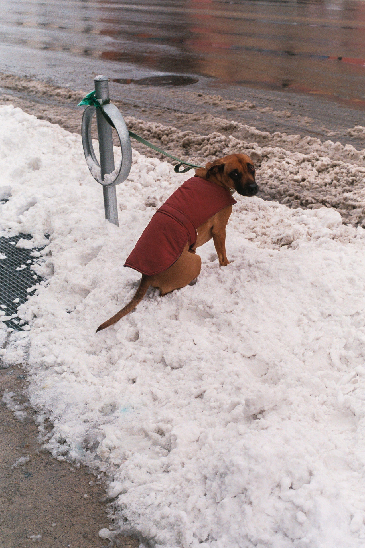 35mm 35mmcolor Cold Day Dog Dog Waiting Domestic Animals No People One Animal Outdoors Pets Snow