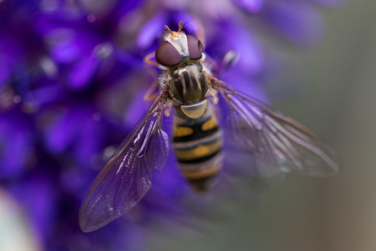 insect, one animal, animal themes, purple, animals in the wild, flower, bee, animal wildlife, no people, nature, focus on foreground, close-up, beauty in nature, outdoors, day, fragility, pollination, freshness, flower head, buzzing