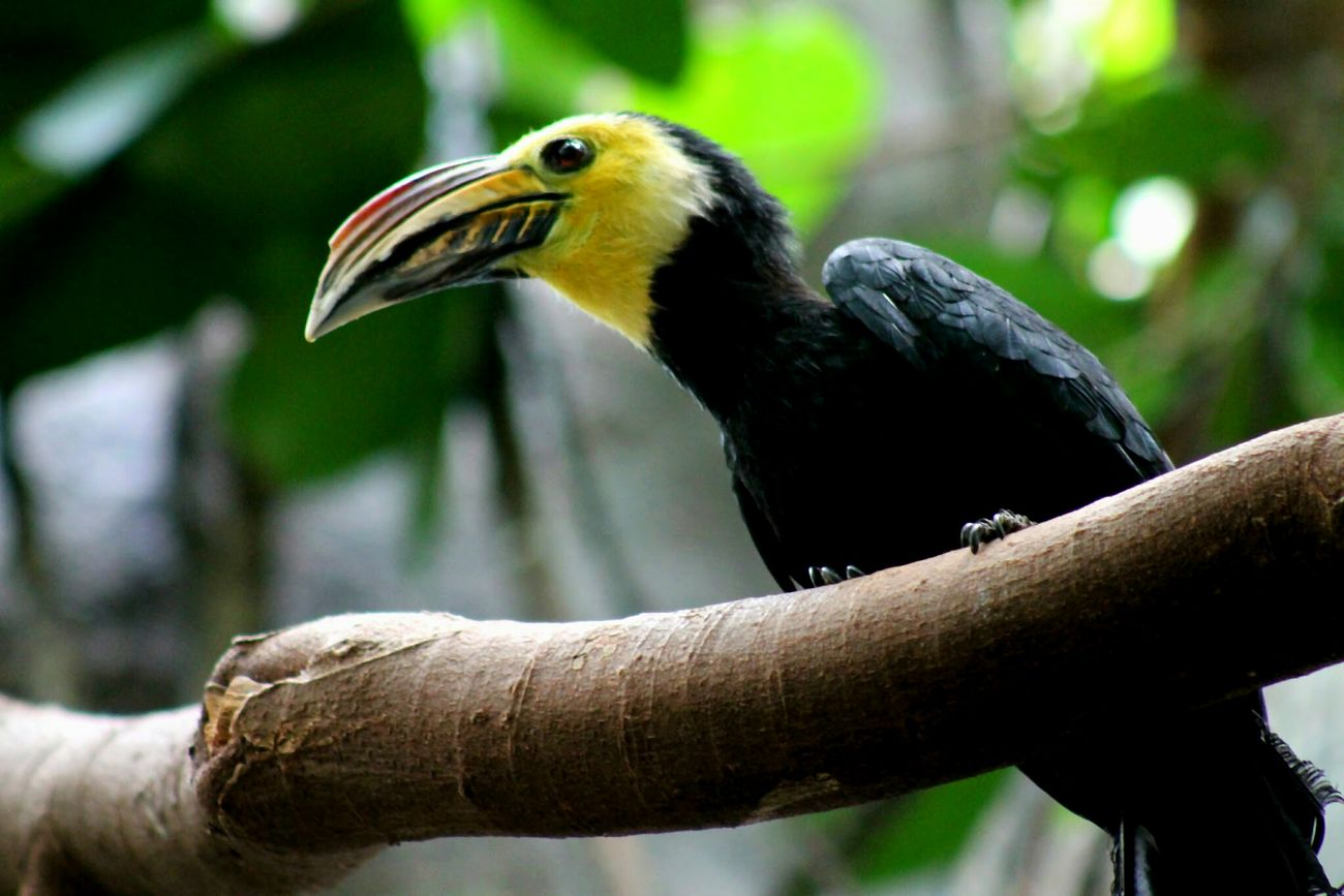 Tucan Bird Animal Zoo Beak Frootloops