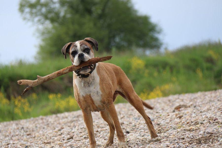 Play with me !!! Portrait Enjoying Life Dog Dogs SweetLe