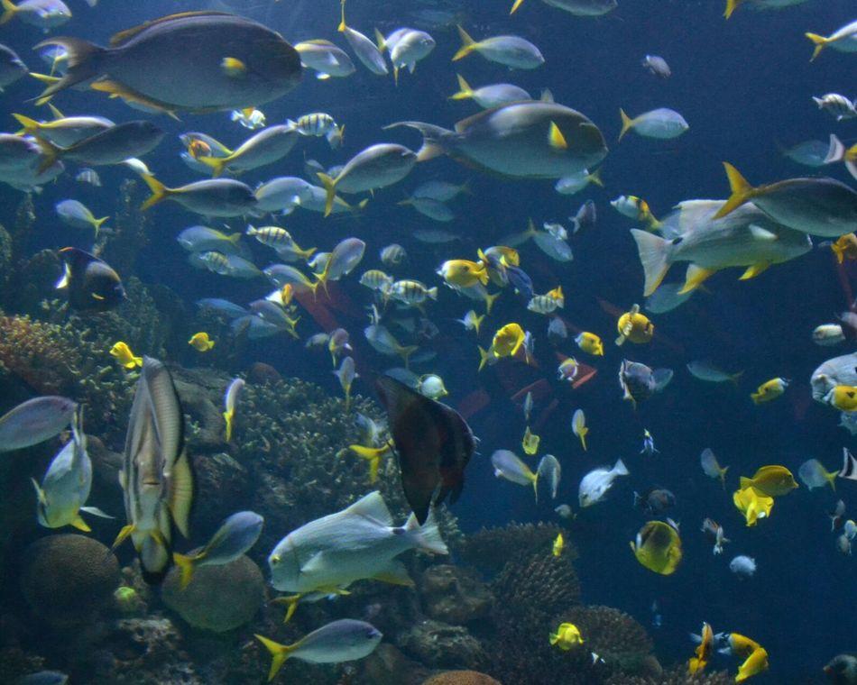 Oceanographic Aquarium Aquarium Photography Aqua Fish Large Group Of Animals Underwater Sea Life Tropical Fish Multi Colored Animal Themes