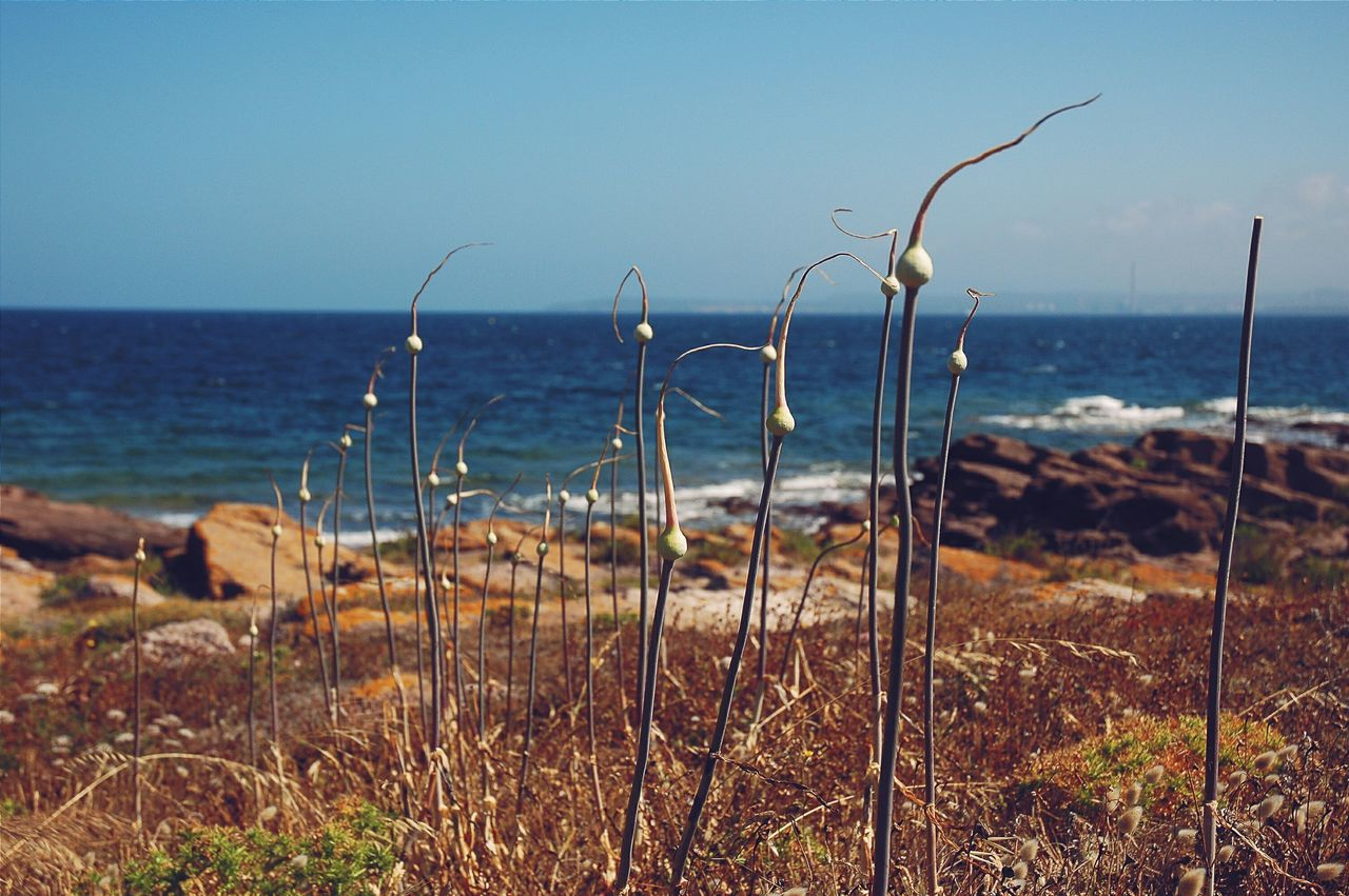 Sea Shore Sardegna Sardinia Sulcis Calasetta View Mare Horizon Nature