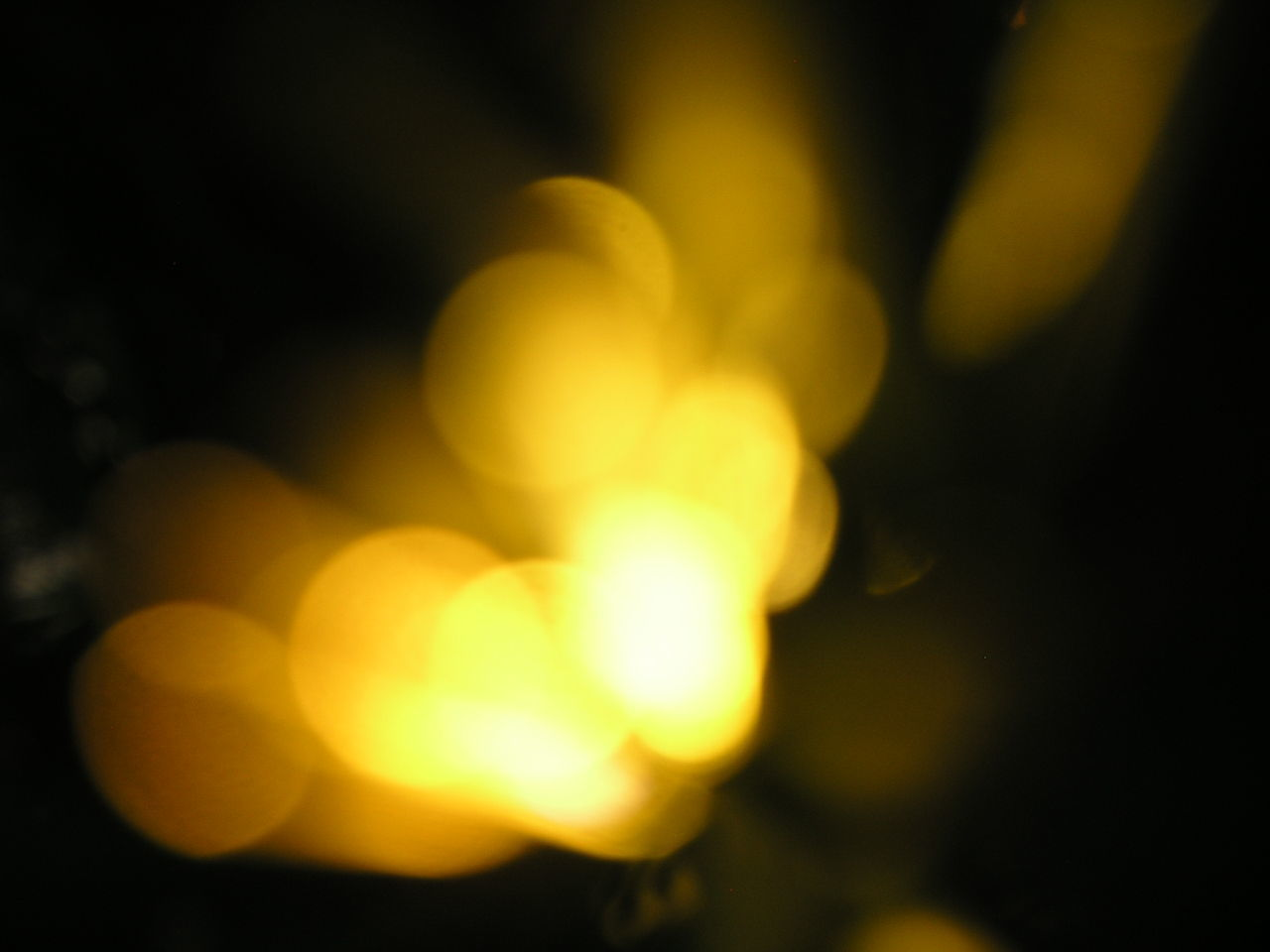 yellow, night, defocused, no people, outdoors, close-up, nature, beauty in nature