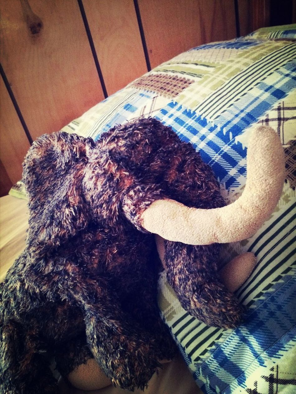 My bed bud. Wooly Stuffed Animals Taking Photos Wooly Mammoth Animal