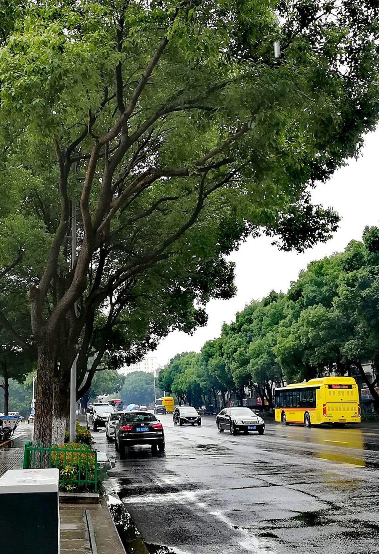 Tree Car Land Vehicle Transportation Road Trees Nature City Keqiao Shaoxing