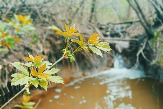 Spring walk with my Samsung Note 5 Beauty In Nature VSCO Vscocam Growth Plant EyeEm Gallery Tree Green Tranquility Outdoors EyeEm Best Edits Yellow Landscape Landscape_Collection Nature No People Close-up Eye4photography  EyeEm Best Shots Samsungphotography Samsung Note 5 Samsung Low Angle View Green Color