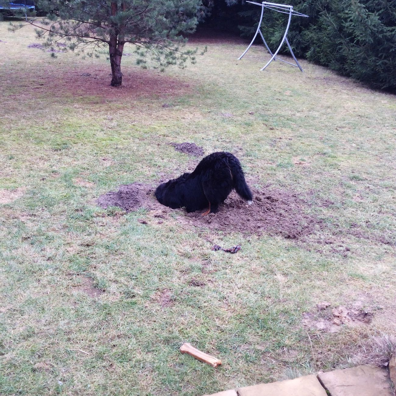 Oulala ! What An Interesting Hole :3 My Dog Is Cooler Than Your Kids Hugo <3 The Best Dog Ever! Enjoying Life Cheese! Winter Or Spring... That's The Question 😶