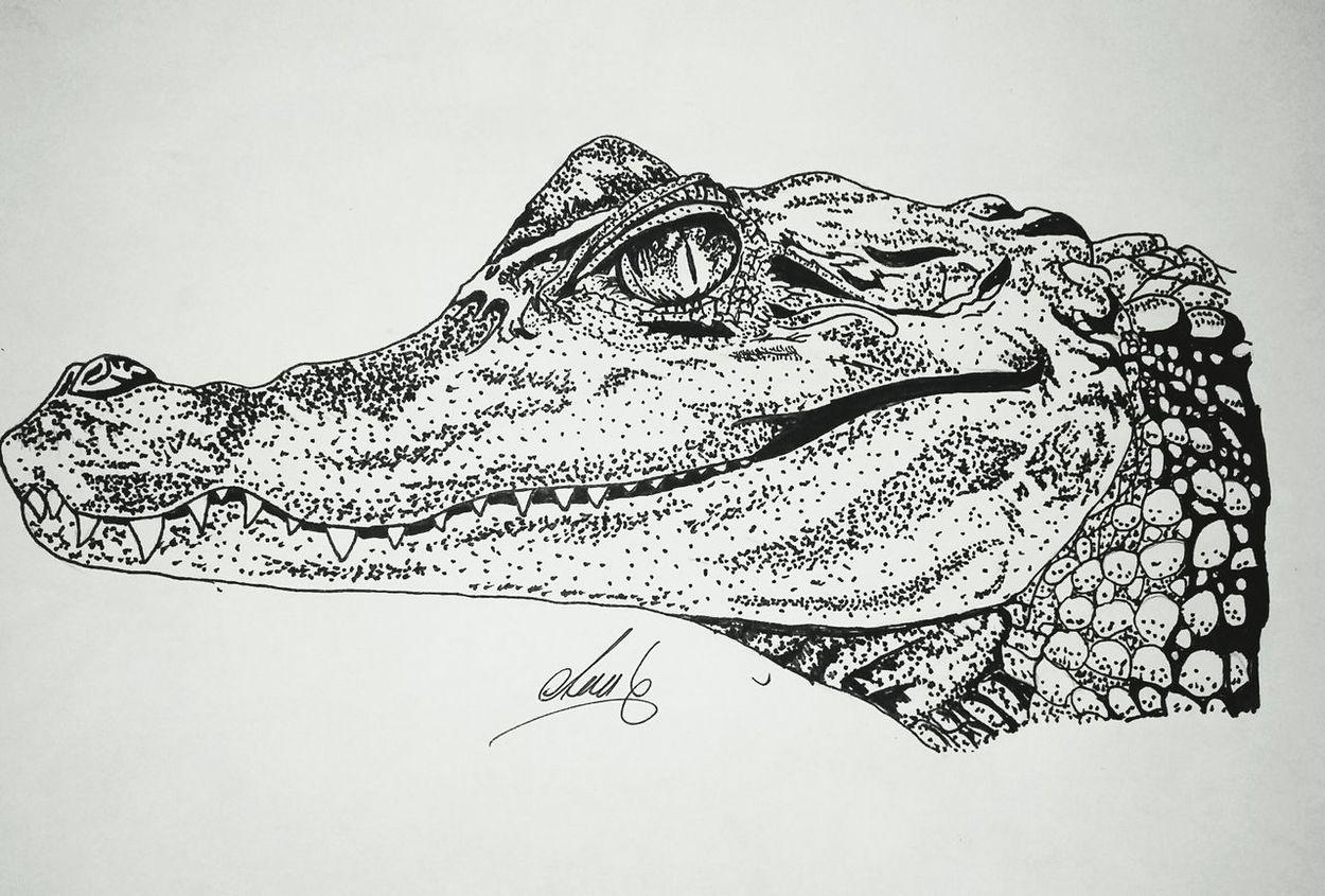 Art Drawingtime Drawings First Eyeem Photo Art, Drawing, Creativity Dibujo Draw Cocodrilo Cocodril Dibujo A Lapiz Dibujoartistico Dibujoamano Dibujo Acabado!! Dibujos :3