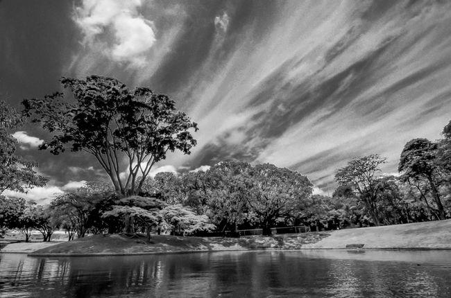 Árboles bajo las nubes !!! @shivaluisa Eye4black&white  Sky Collection Eye4blackandwhite Bw-collection