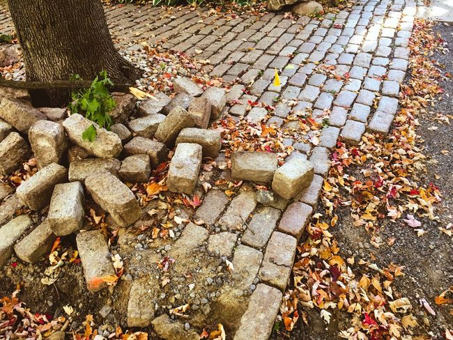 High Angle View Tree Trunk Leaf Cobblestone Autumn Day Large Group Of Objects Autumn Collection Surface Level Transitional Moments Street Photography Outdoors Footpath Fallen Leaf Abundance Leaves Dirty Natural Condition Messy No People Stone Material Tranquility Messthetics