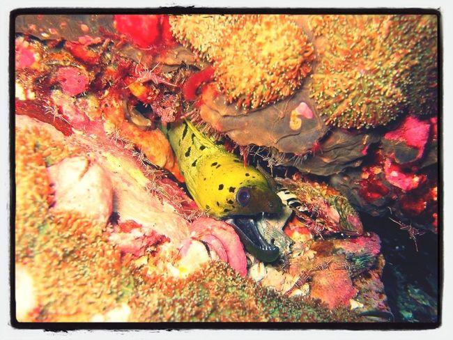 a moray eel Underwaterphotography Eel Underwater