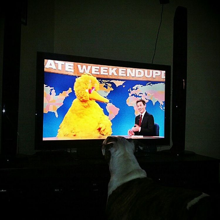 Romney likes Bigbird . Beatrice does not. PureBeatrice