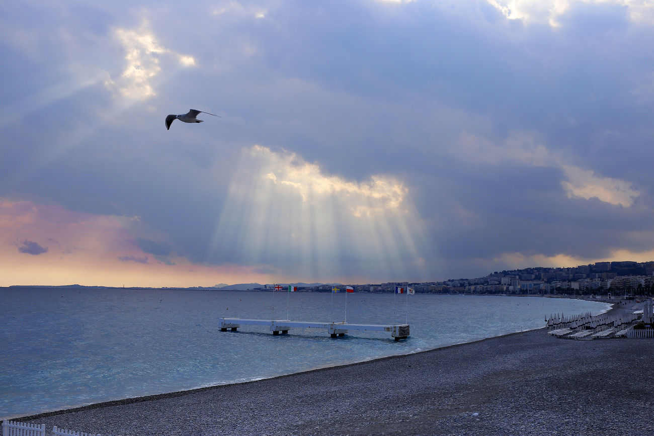 Animal Themes Beauty In Nature Bird Cloud - Sky Clouds France Nature Nice Sea Seagull Sky Sunset Water