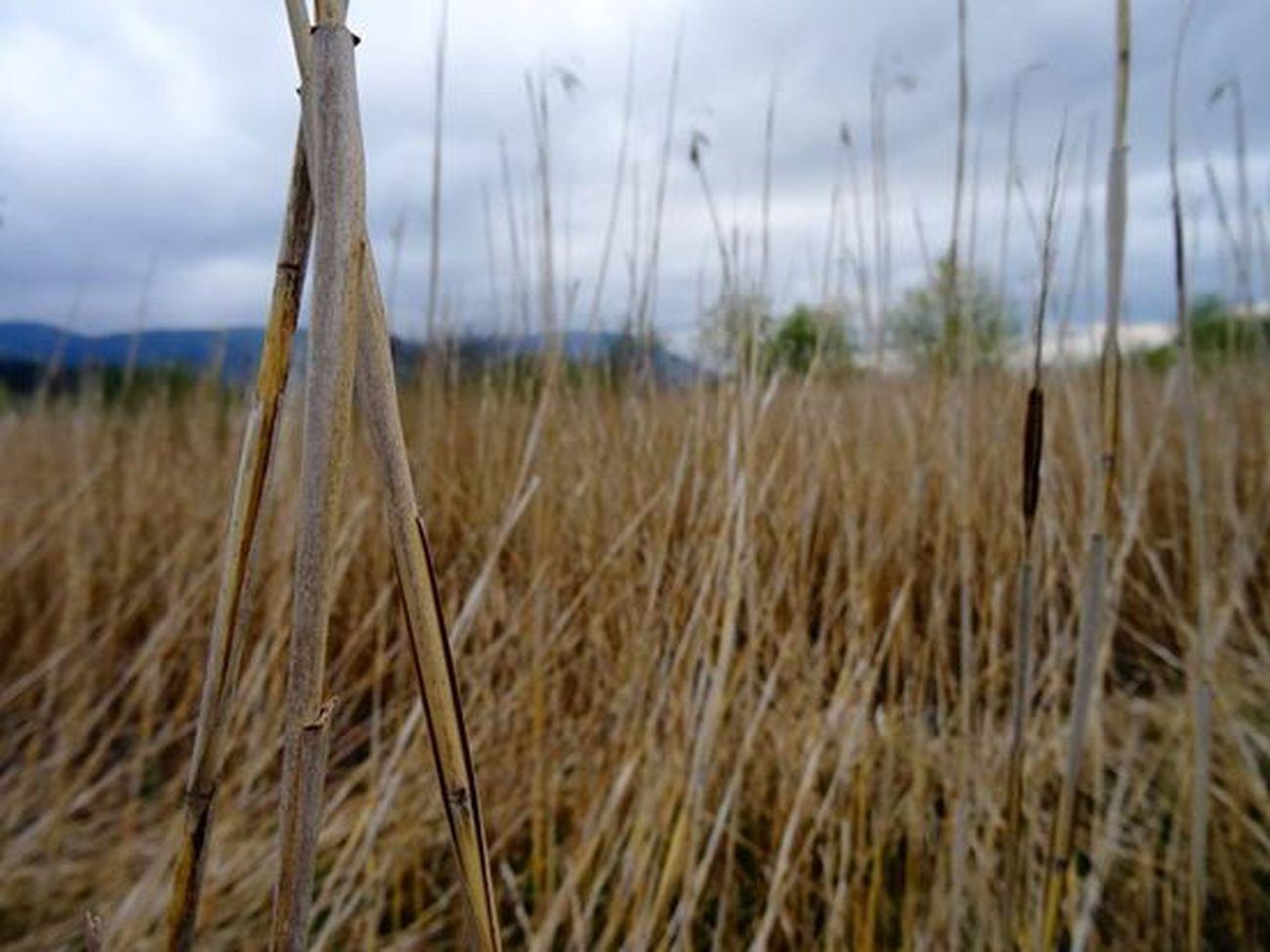 Nature Photography Nature Freedom Walking Around