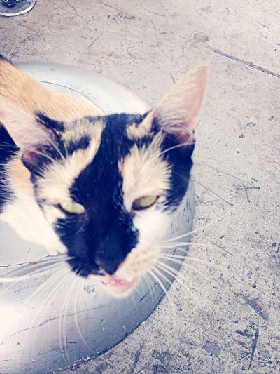 Meet Starbucks the Cat...