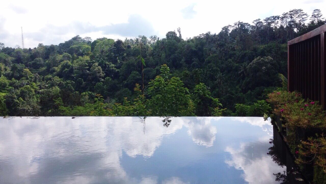 tree, nature, growth, sky, water, no people, plant, outdoors, beauty in nature, day, mountain