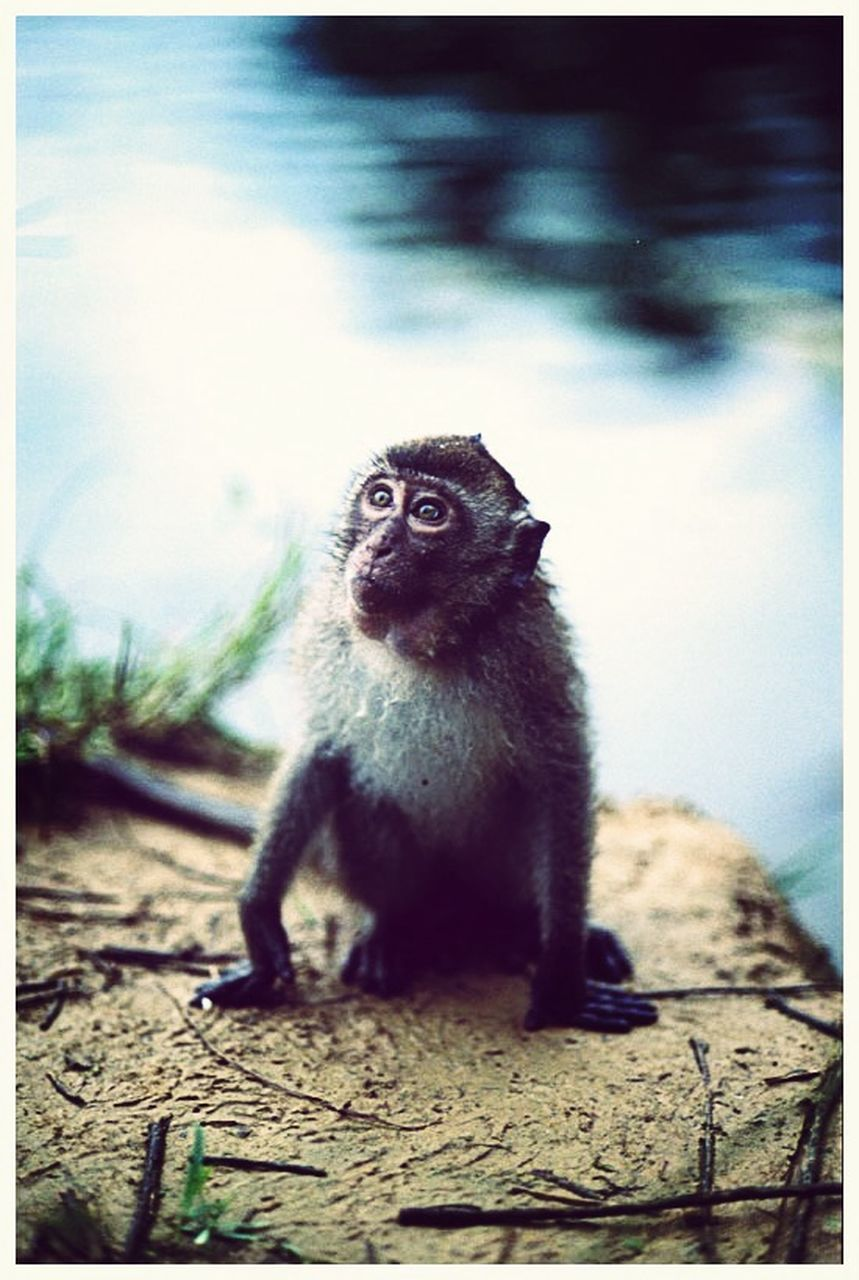 one animal, animal themes, animals in the wild, wildlife, no people, mammal, day, outdoors, sitting, nature, monkey, lemur, close-up, sky