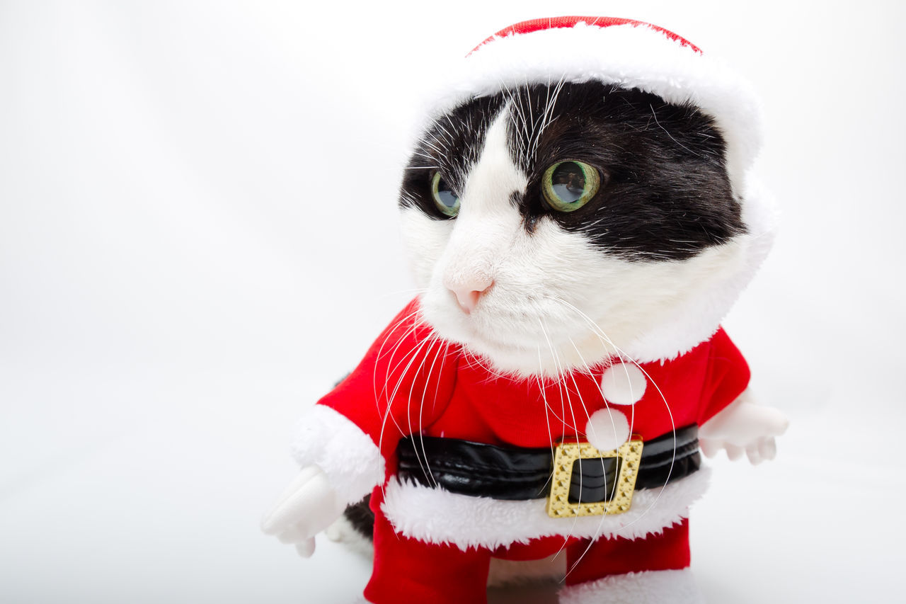 Close-Up Of Cat In Santa Clothing Over White Background