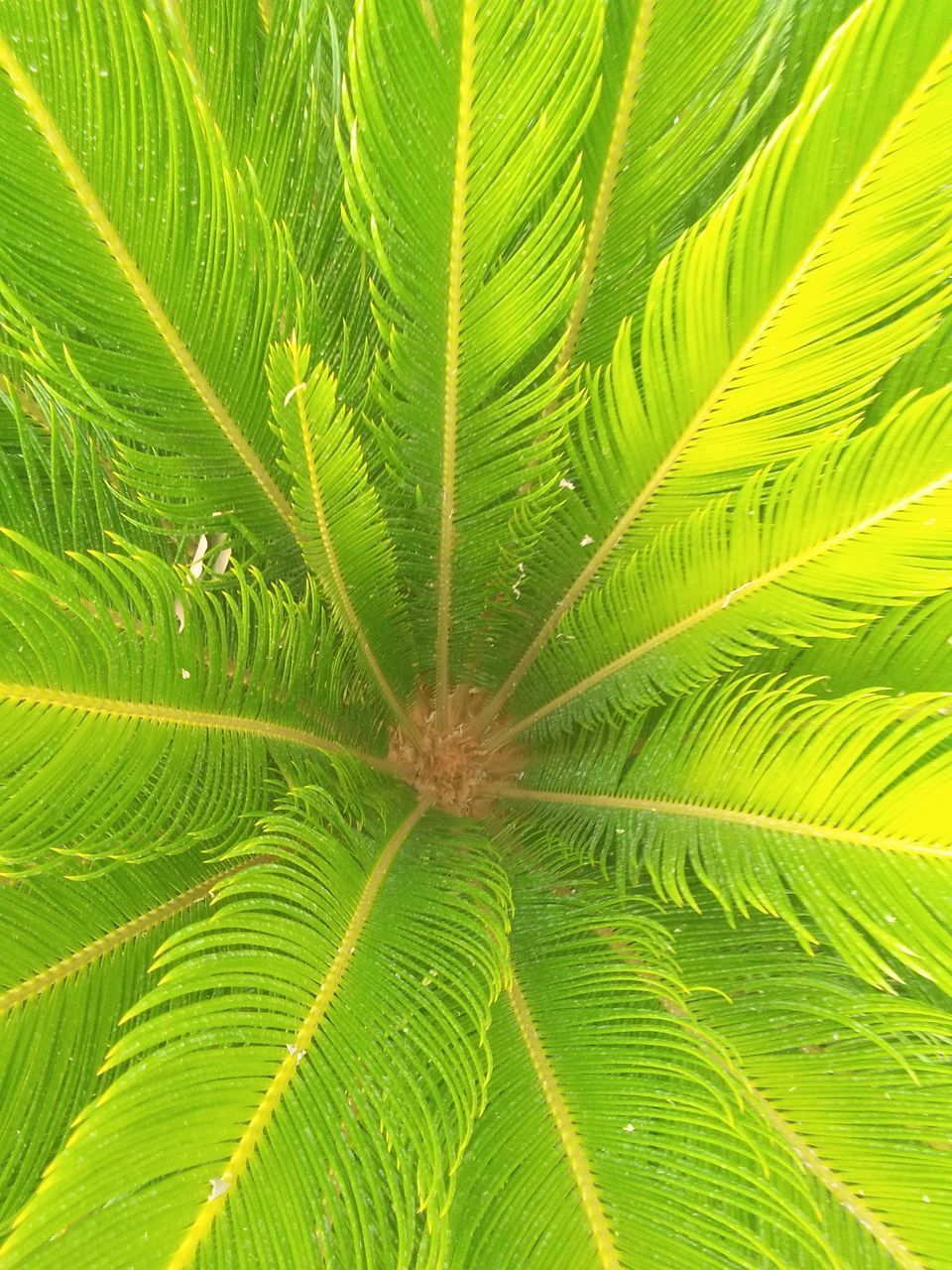 leaf, green color, growth, nature, full frame, plant, freshness, no people, backgrounds, palm tree, day, frond, close-up, beauty in nature, tree, outdoors, fragility