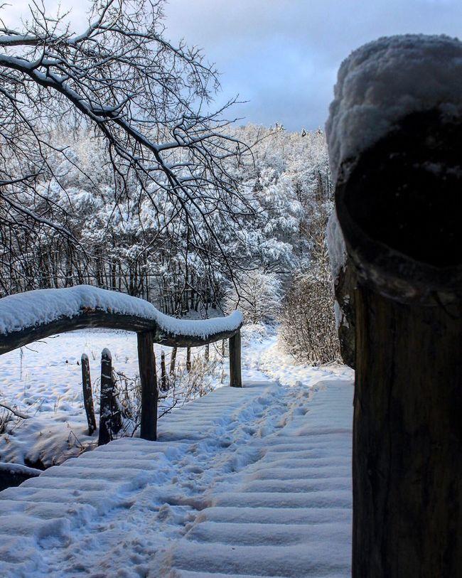 Snow Winterporn Winterphotography Schnee MeinDeutschland Winter Ice Icecold Forest Nature Natur Brücke Bridge