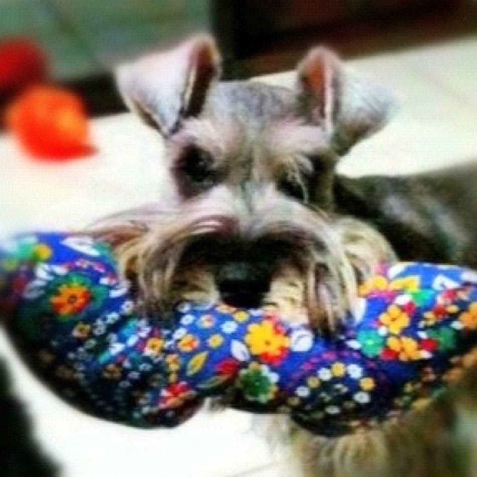 Instajogo Jogo23 Fixgram Instagram iphone4 picoftheday popular iphoneonly photografy goiania brasil dogs iphone