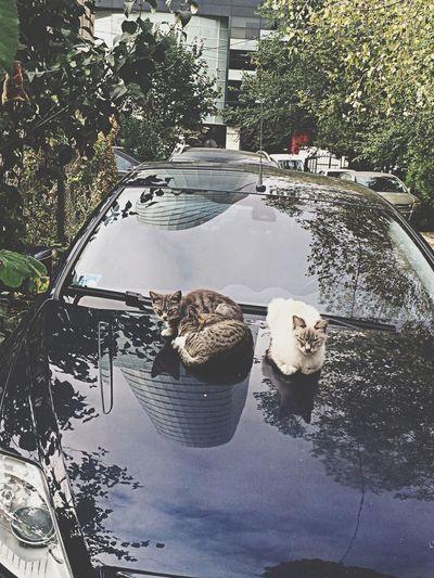 Cats Aristocats Nature Little Kitty