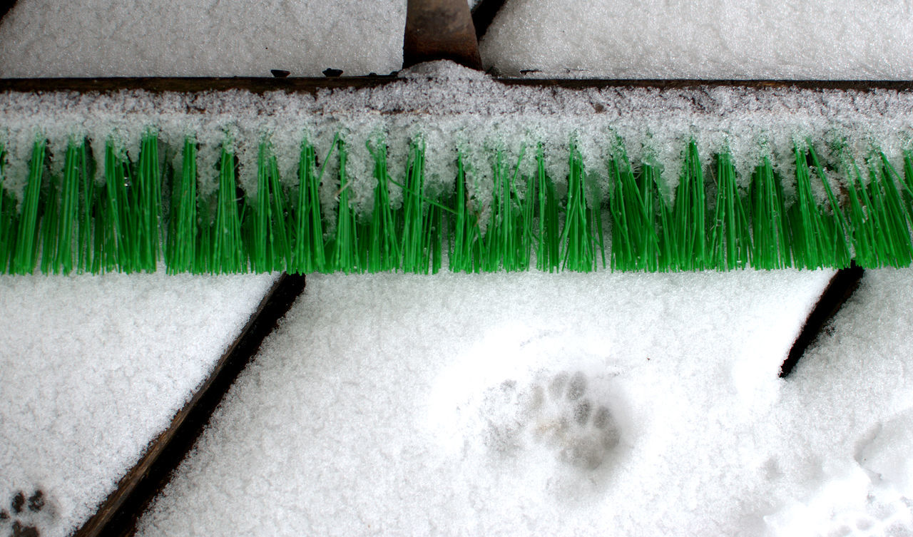 Brush Close-up Day FootPrint Green Color Nature No People Outdoors Snow Winter