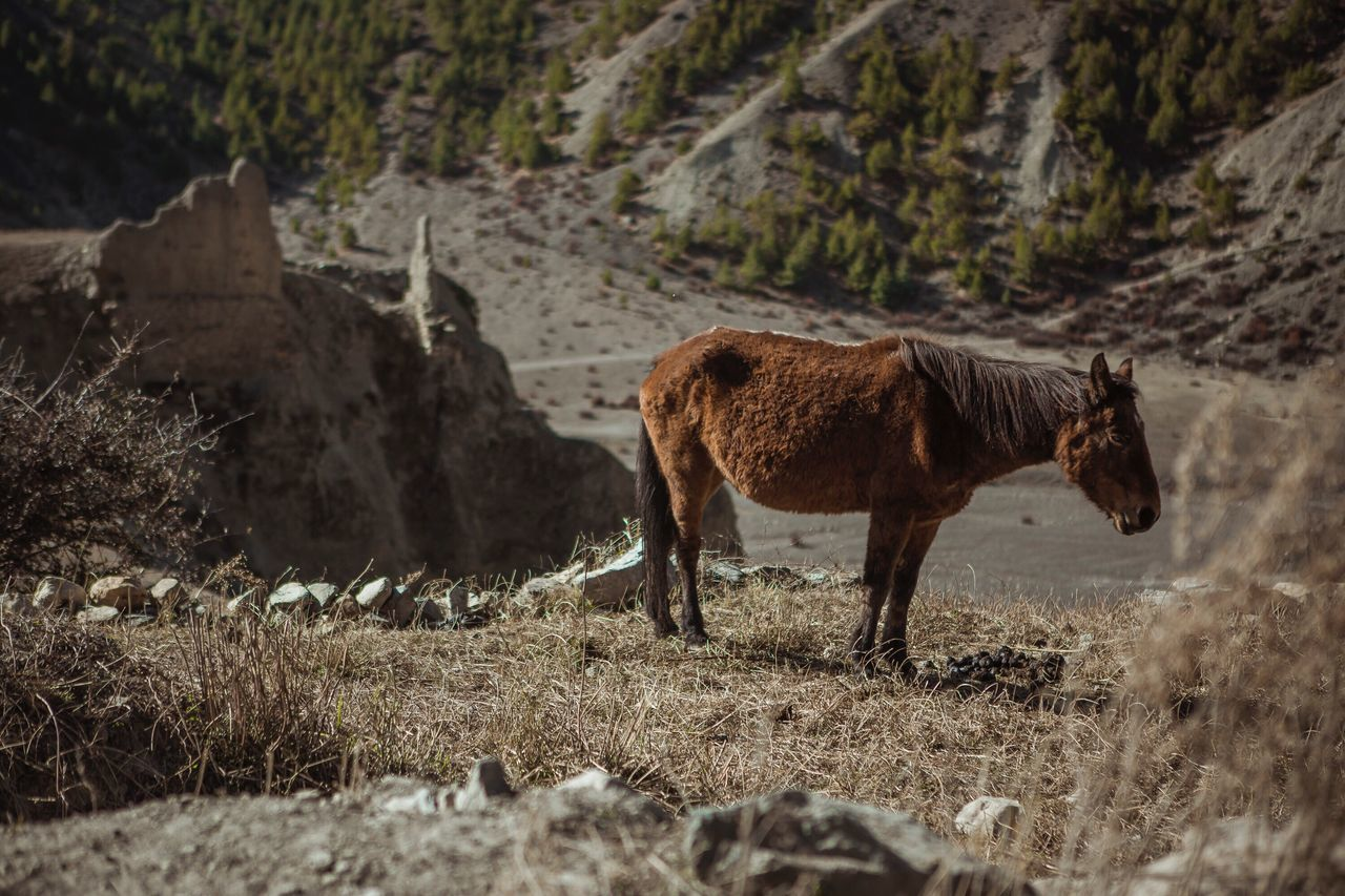Horce Animal Themes One Animal Domestic Animals Mountain Field Nature Outdoors Mammal No People Landscape Nepal Himalaya Himalayas