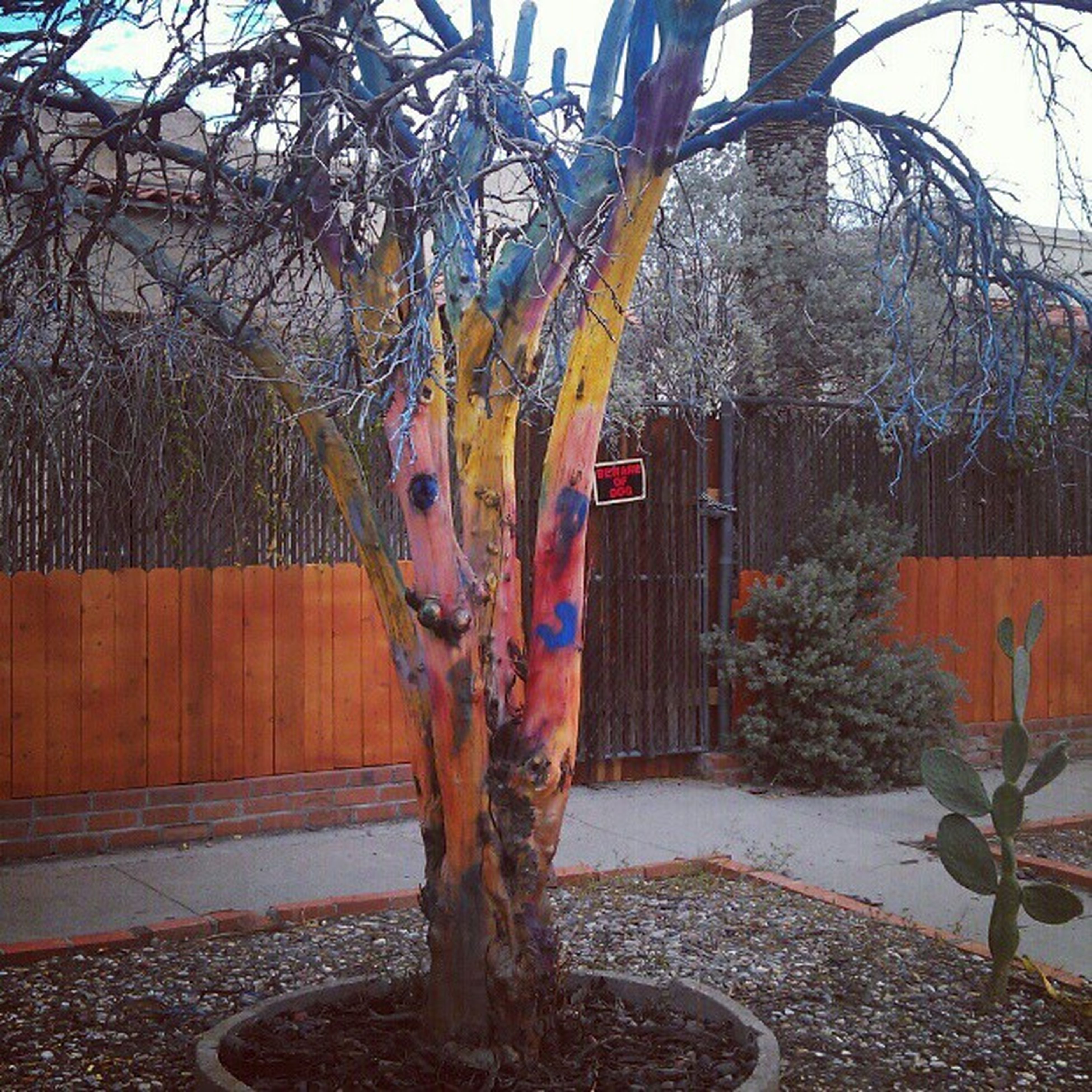 Painted tree Whenbeautiescollide