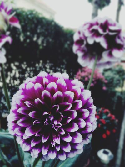 My Favorite Place First Eyeem Photo Flowers Beauty In Nature Beautiful Nature Beautiful Flower Photography