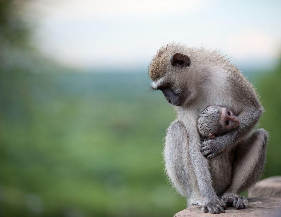 Beautiful stock photos of baby animals, Animal, Baby, Clinging, Embracing