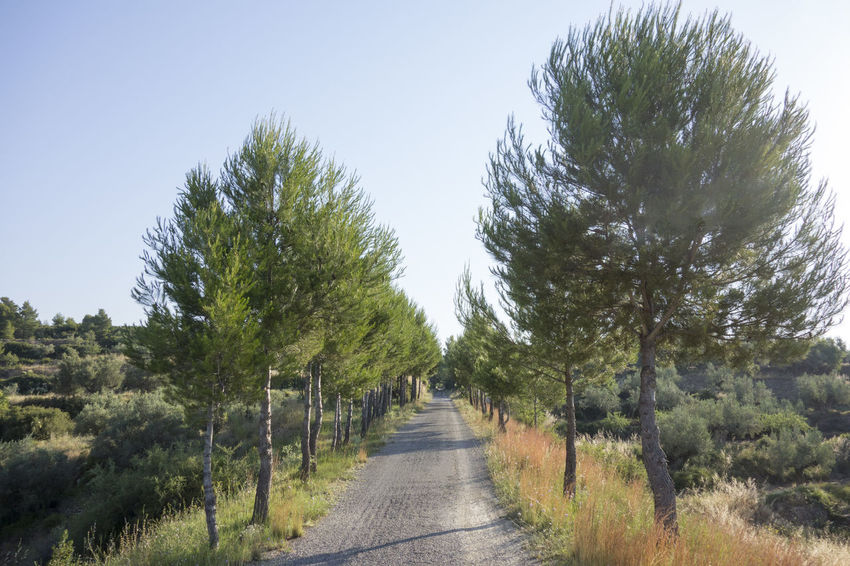 Beauty In Nature Bike Castellón Clear Sky Cycling Day Greenway Growth Landscape Nature Nature No People Ojos Negros Outdoors Plant Road Scenics SPAIN The Way Forward Tranquil Scene Tranquility Tree València Via Verde Way
