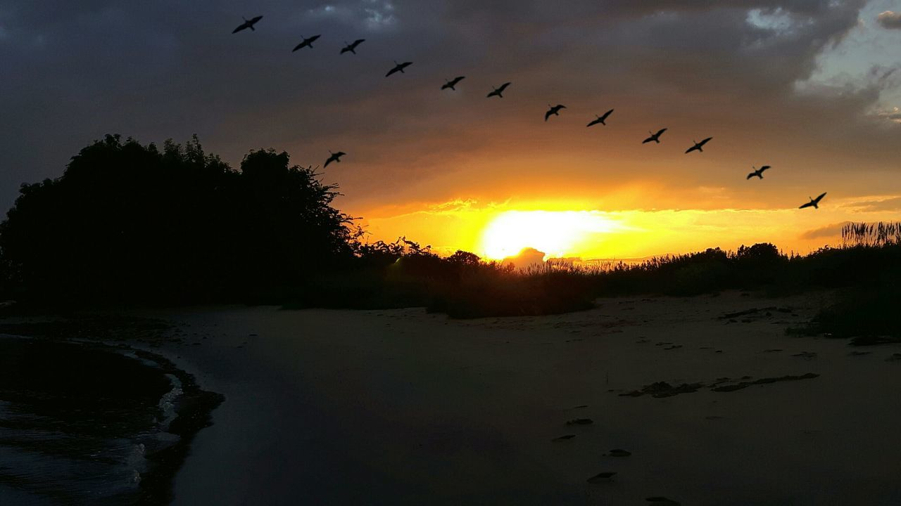 sunset, bird, flying, silhouette, animal themes, nature, animals in the wild, beauty in nature, flock of birds, large group of animals, sky, scenics, animal wildlife, migrating, sun, no people, outdoors, tranquil scene, cloud - sky, water, tranquility, tree, spread wings