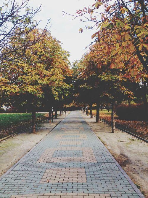 Colors Of Autumn Autumn Madrid Park