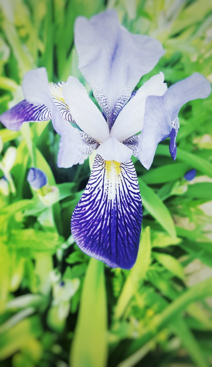 flower, fragility, petal, beauty in nature, purple, nature, flower head, day, growth, freshness, focus on foreground, close-up, iris - plant, outdoors, plant, no people, blooming