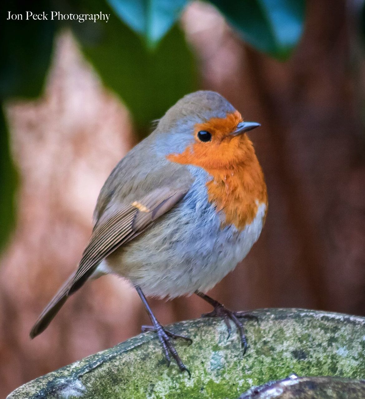 bird, one animal, animals in the wild, animal themes, focus on foreground, perching, animal wildlife, day, close-up, robin, outdoors, nature, no people, beauty in nature