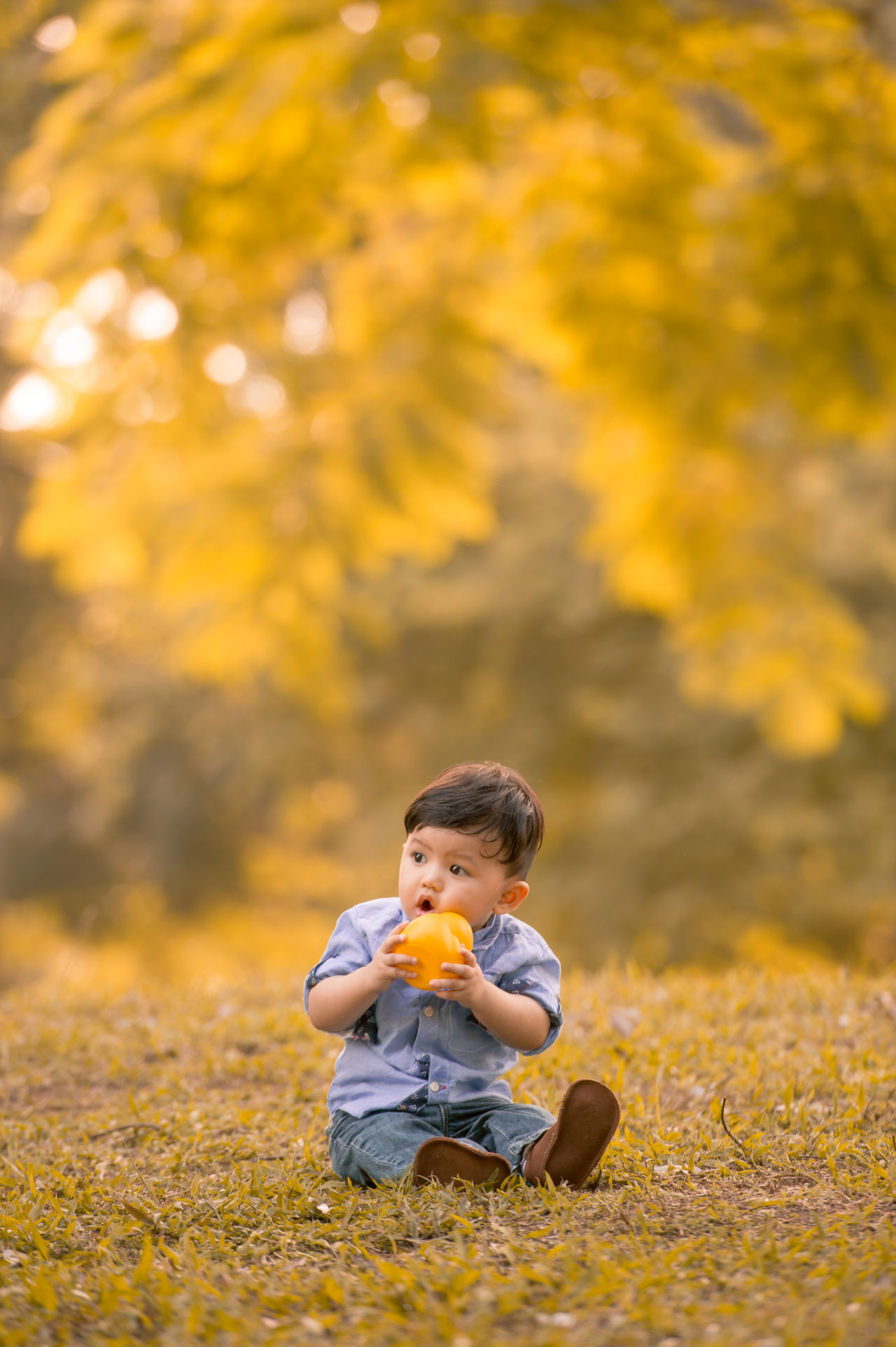 Chinese Boy ASIA Asian  Asian Family Autumn Beauty In Nature Boys Casual Clothing Change Childhood Chinese Day Eating Food Full Length Leaf Leisure Activity Lifestyles Nature One Person Outdoors Real People Sitting Tree Yellow Young Women