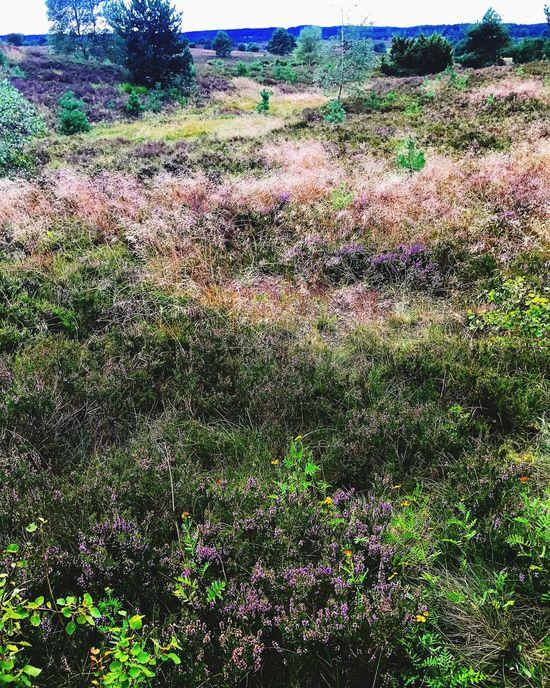 Lüneburger Heide Lüneburg Nature Photography Nature Wild Vegetation Travel In Germany Landscapes Purple Lost In The Landscape