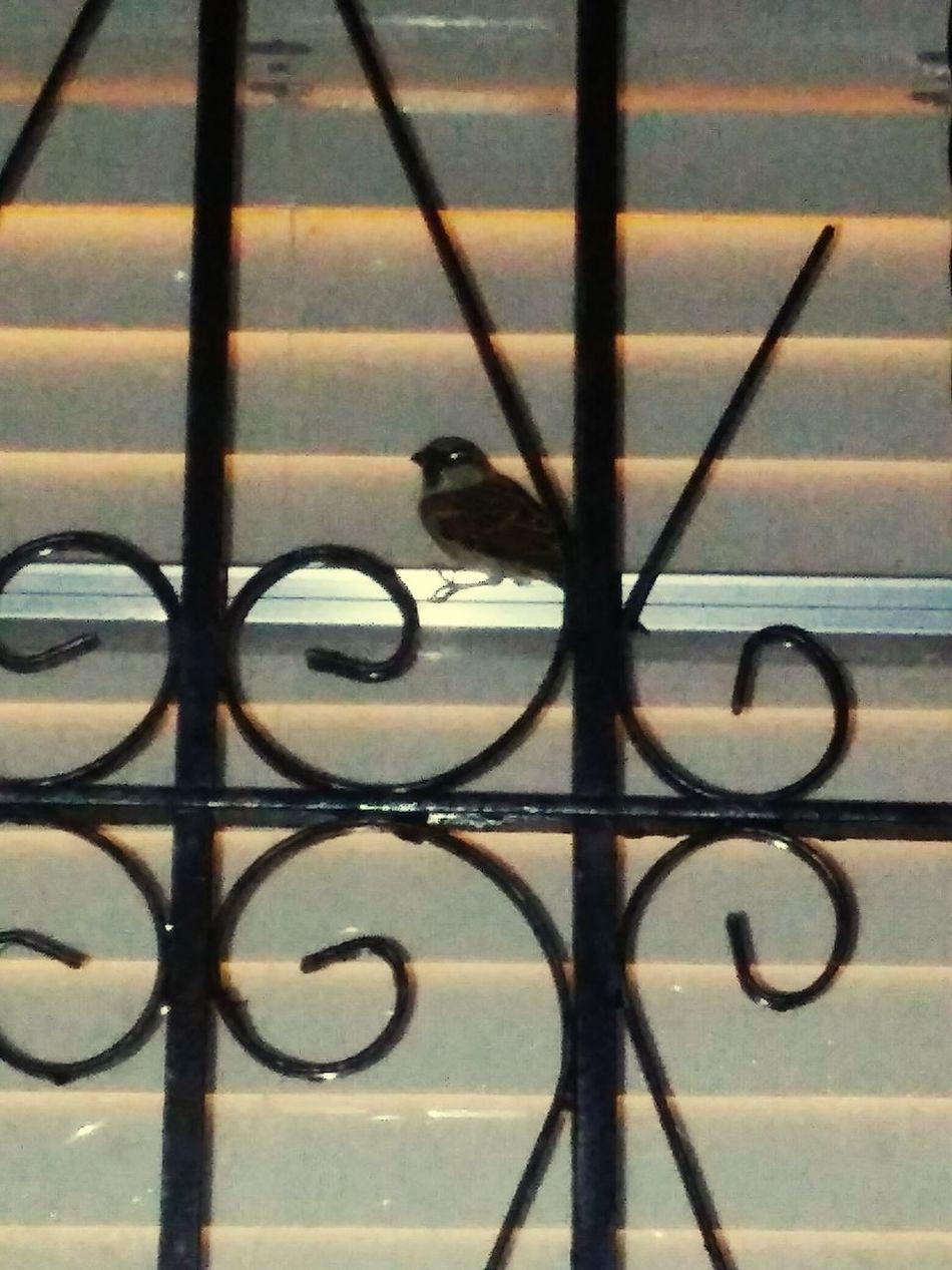 Bird Photography Natur!! Taking Photos
